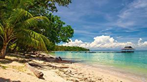 Картинка Малайзия Тропики Берег Пирсы Пальмы Borneo Island (Kalimantan)