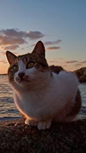Обои Коты Рассвет и закат Океан Животные