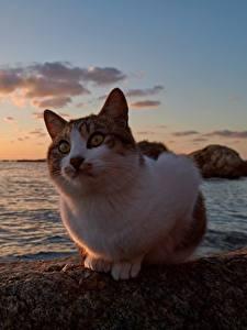Обои Коты Рассвет и закат Океан
