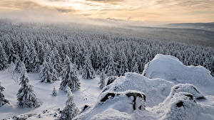 Обои Германия Зимние Леса Ель Снег Lower Saxony