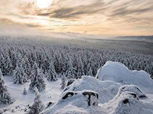 Обои Германия Зимние Леса Ель Снег Lower Saxony Природа