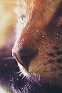 Картинки Коты Крупным планом Носа Размытый фон