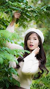 Фото Азиатки Боке Позирует Ветвь Листва Свитер Девушки