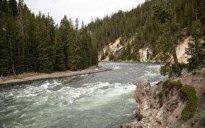 Картинка Штаты Парки Реки Леса Йеллоустон Yellowstone national park, Wyoming Природа
