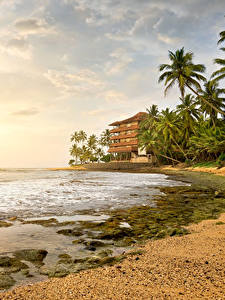 Обои Шри-Ланка Тропический Пейзаж Берег Небо Море Пальмы Облака