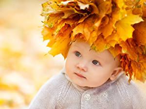 Картинки Осенние Грудной ребёнок Смотрит Листва Ребёнок