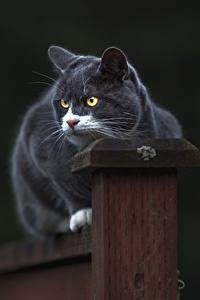 Картинка Коты Серый животное