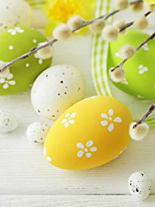 Фотография Праздники Пасха Доски Яйцами Ветки