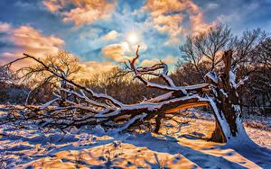 Фотографии Зима Небо Снег Ветвь Солнце Облака