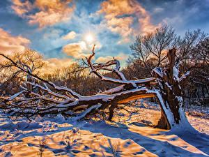 Фотографии Зима Небо Снег Ветвь Солнце Облака Природа