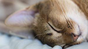 Картинки Кот Вблизи Морды животное