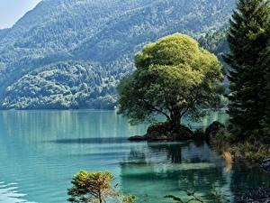 Обои Италия Озеро Горы Деревьев Trentino, dolomite Alps
