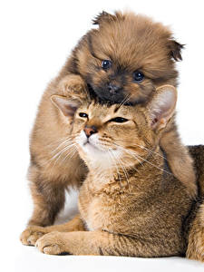 Картинка Кошка Собаки Белый фон Два Щенков Животные