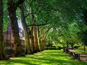 Обои Англия Парки Лондон Деревья Трава Скамейка
