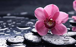 Картинки Орхидеи Камень Розовый Капли Цветы