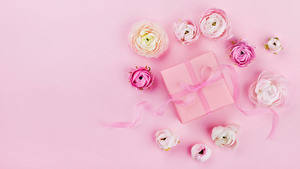 Обои Лютик Цветной фон Подарки Лента Цветы