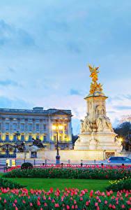 Картинки Англия Вечер Памятники Тюльпан Небо Лондон Дворца Уличные фонари Buckingham palace Города