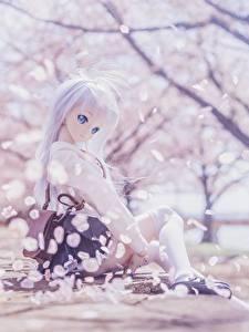 Фотография Кукла Блондинок Сидящие Красивая Сакура Девушки