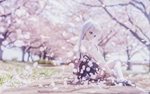 Фотография Кукла Блондинок Сидящие Красивая Сакура