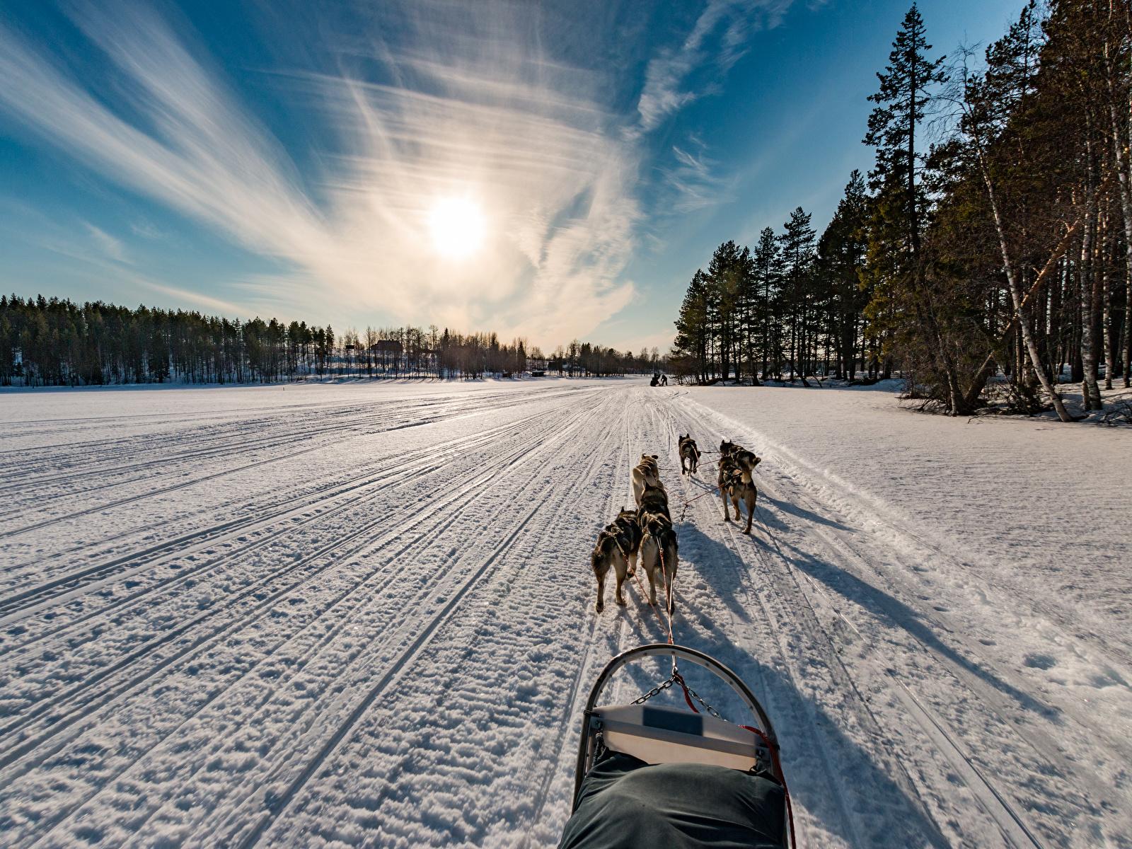 Фотографии Собаки Финляндия Northern Ostrobothnia зимние Природа Снег Дороги Рассветы и закаты 1600x1200 Зима