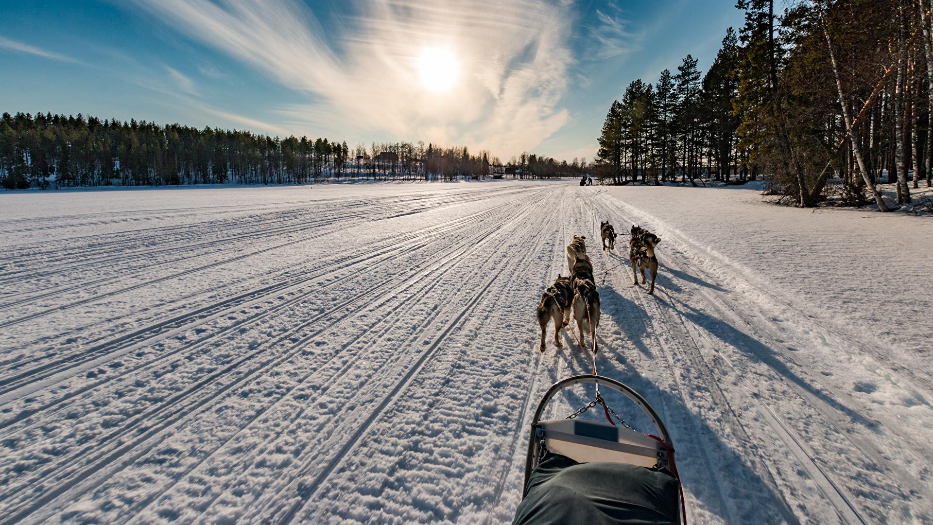 Фотографии собака Финляндия Northern Ostrobothnia зимние Природа Снег Дороги Рассветы и закаты 1920x1080 Собаки Зима снеге снегу снега рассвет и закат