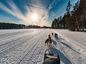 Фотографии Финляндия Зима Рассветы и закаты Дороги Собаки Снег Northern Ostrobothnia Природа