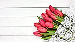 Картинка Тюльпаны Красный Доски Цветы