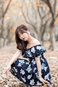 Фотография Азиаты Размытый фон Деревьев Листья Платье Шатенки Взгляд Сидит молодые женщины