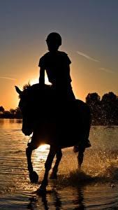 Обои для рабочего стола Рассвет и закат Лошади Озеро Сидящие Силуэта С брызгами животное