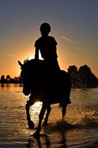 Картинки Рассвет и закат Лошади Озеро Сидящие Силуэта С брызгами животное