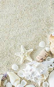 Картинка Ракушки Морские звезды Песок Шаблон поздравительной открытки