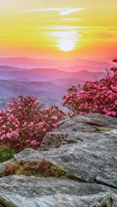 Фотографии США Пейзаж Рассветы и закаты Рододендрон Холмов Кустов Roan Mountain Rhododendron Gardens