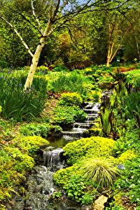 Фотографии Англия Парки Ручей Rosemoor Gardens Природа
