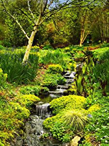 Фотографии Англия Парки Ручей Rosemoor Gardens