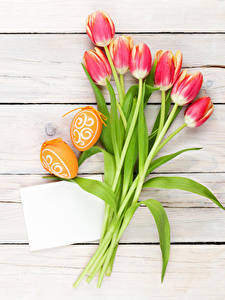 Фотография Пасха Тюльпан Доски Яйцами Шаблон поздравительной открытки цветок