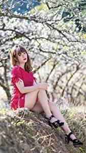 Фотографии Цветущие деревья Азиаты Размытый фон Шатенки Сидит Платья Ног Туфель молодые женщины