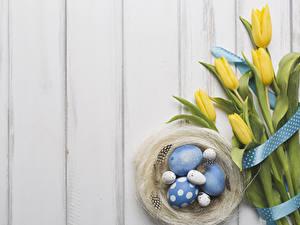 Обои Пасха Тюльпаны Перья Доски Гнездо Яйца Ленточка Цветы