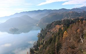 Обои Словения Осень Лес Гора Озеро Тумана Bled Природа