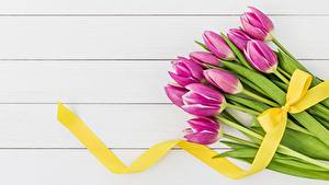 Фотография Тюльпаны Доски Бантик Лента Цветы
