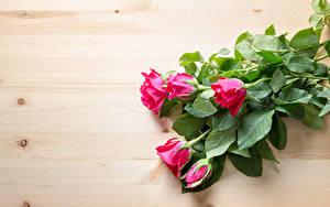 Картинки Розы Доски Розовая Цветы
