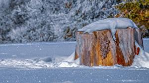 Фотография Зимние Пень Снег Природа