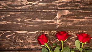 Картинка Розы Доски Красные Трое 3 Цветы