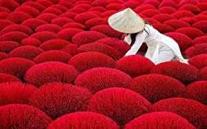 Фото Поля Красная Шляпы Природа Девушки