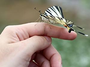 Фотография Пальцы Бабочки Вблизи Руки Природа