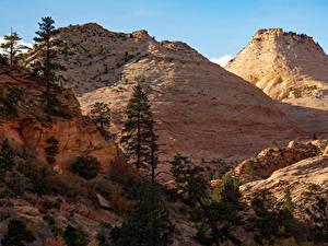 Картинки США Зайон национальнай парк Парки Деревья Природа