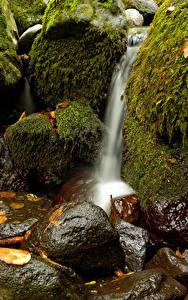 Фотографии Водопады Камень Мха Природа