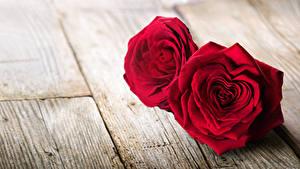 Картинки Розы Доски Двое Красный Сердечко Цветы