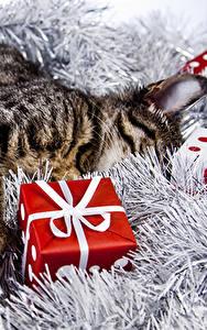 Обои Новый год Кошки Сон Подарки Куб