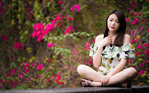 Фотография Азиатки Боке Сидит Поза Ног Шатенка