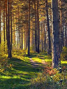Фотография Леса Дерево Траве Тропы